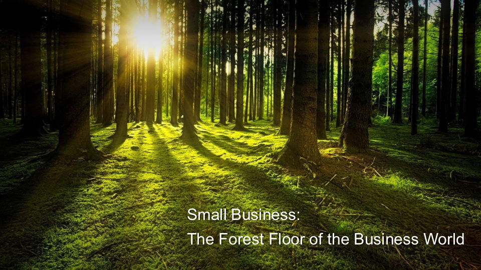Small Business: The Forest Floor of the Business World